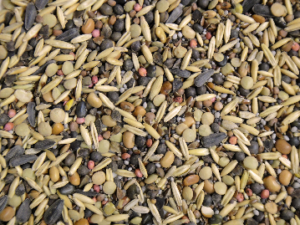 Create a Bespoke Cover Crop Mix