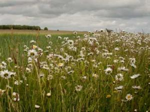Floristically Enhanced Field Margin