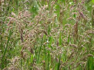 Flower Meadow and Enhanced Margin