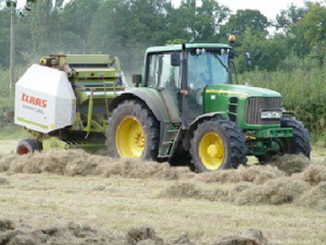 Hay Maker Grass Seed