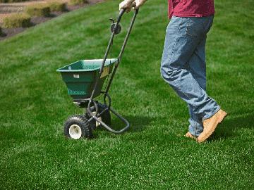 Lawn Repair Grass Seed