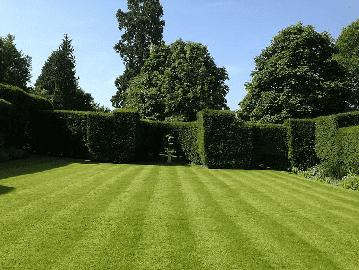 Low Maintenance Lawn Seed