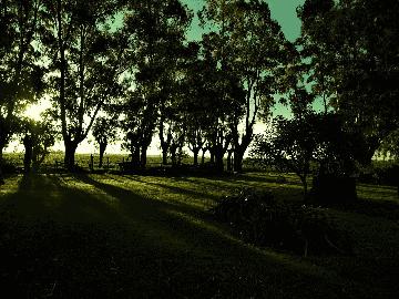 Shady Area Lawn Seed