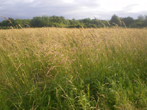 Species Rich Grass Mixture