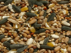 Wild-Bird-Feed-With-Wheat.png