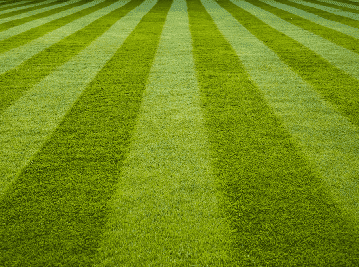 All Fine Lawn Seed