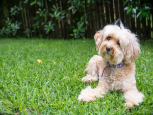 Best Grass Seed For Dogs